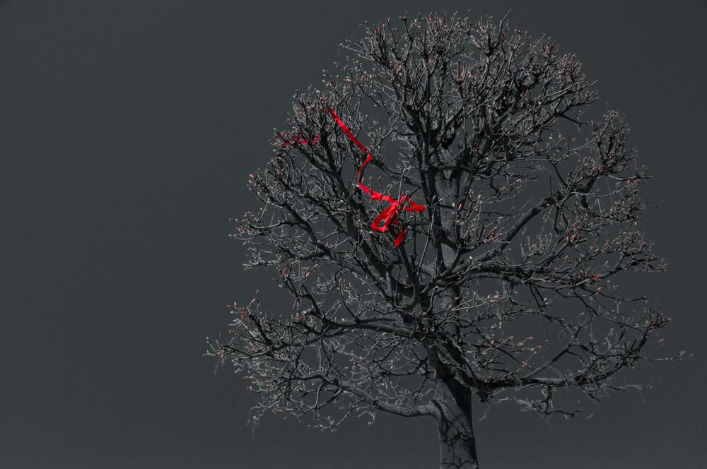 Bildvorstellung #3 – Das rote Band